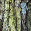 Green pine bark background — Stock Photo