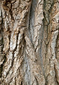 Brown bark background — Stock Photo