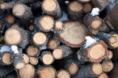 Woodpile background — Stock Photo