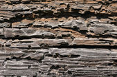 Textured wood — Stock Photo