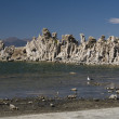 Mono Lake tufand seagull — Stock Photo #3874967