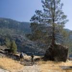 Mature couple hiking near Hetch Hetchy Reservoir, Yosemite California — Stock Photo #3874987