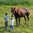Kids and horses - Stock Photo