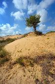 Eenzame boom onder het zand — Stockfoto