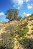 одинокое дерево среди песок — Стоковое фото