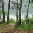 Rain forest on shores of Lake — Stock Photo #3279329