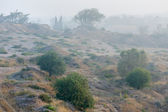Fog in the Israel — Stock Photo