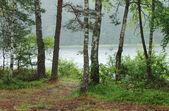 Floresta de chuva nas margens do lago — Foto Stock