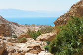 Ein Gedi Nature Reserve off the coast of the Dead Sea — Stock Photo