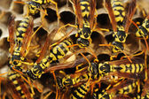 Wasps nest in the grass — Stock Photo