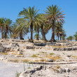 Biblical place of Israel: Megiddo — Stock Photo #3470005