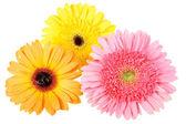 Three flower with dew — Stock Photo