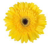 One yellow flower — Stock Photo