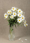 Bouquet with white camomiles — Stock Photo