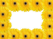 Abstract frame with yellow flowers — Stock Photo