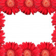Abstract frame with red flowers — Stock Photo