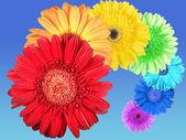 Rainbow of flowers — Stock Photo
