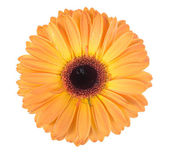 One orange flower — Stock Photo