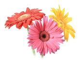 Bouquet of three flowers — Stock Photo