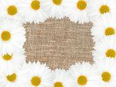 Abstrakt ram med vita blommor — Stockfoto