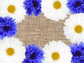 Beyaz ve mavi çiçekli çerçeve — Stok fotoğraf