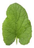 Een groen blad — Stockfoto