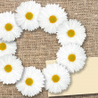 Stock Photo: Abstract frame with white flowers