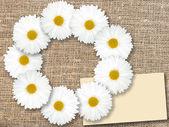 Abstract frame met witte bloemen — Stockfoto