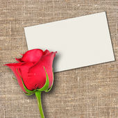 One red rose and message-card — Stock Photo