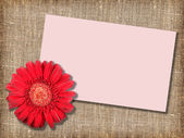 One red flower with message-card — Stock Photo