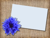 One blue flower with message-card — Stock Photo