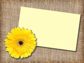 One yellow flower with message-card — Stock Photo