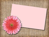 One pink flower with message-card — Stock Photo