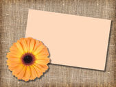 En orange blomma med meddelande-kort — Stockfoto