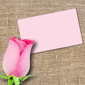 One pink rose and message-card — Stock Photo
