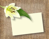 One white flower with message-card — Stock Photo