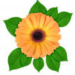 One orange flower with green leaf — Stock Photo