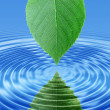 Reflect green leaf in blue water — Stock Photo