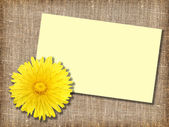 One yellow dandelion-flower with message-card — Stock Photo