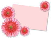 Group of pink flowers with message-card — Stock Photo