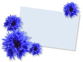 Group of blue flowers with message-card — Stock Photo