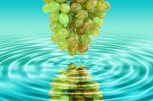 Reflection of a green grape in water — Stock Photo