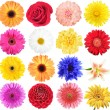 Set of flowers - Stock Photo