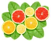 Set of cross citrus fruits on green leaf — Stock Photo