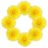 Frame as ring of yellow flowers — Stock Photo