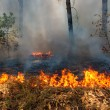 Forest fire — Stock Photo #3571444