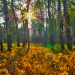 Autum forest — Stock Photo