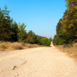 Long and wide forest road — Stockfoto #3578995