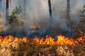 Lesní požár — Stock fotografie
