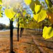 Autumn avenue — Stock Photo #3904023